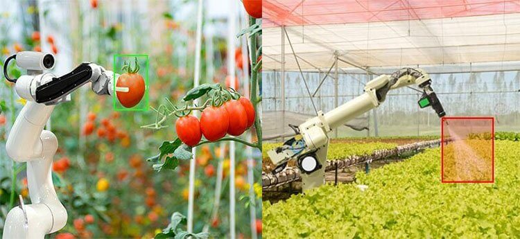 AI Robotics in Agriculture